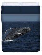 A Breaching Humpback Whale Duvet Cover