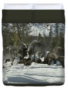 A Pack Of Gray Wolves, Canis Lupus Duvet Cover