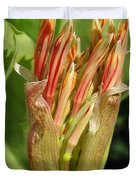 African Blood Lily Or Fireball Lily Duvet Cover