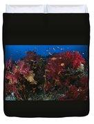 Anthias Fish Swim Near A Reef Wall Duvet Cover