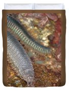 Clam Worm Duvet Cover