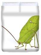 Giant Leaf Katydid Barbilla Np Costa Duvet Cover