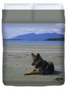 Gray Wolf On Beach Duvet Cover
