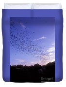 Mexican Freetail Bats Duvet Cover