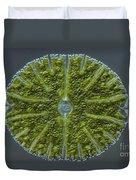 Micrasterias Sp. Algae Lm Duvet Cover