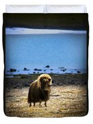 Muskox Ovibos Moschatusin The Northwest Duvet Cover