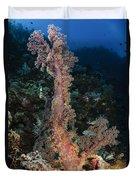 Soft Coral Seascape, Indonesia Duvet Cover