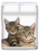 Tabby Kittens Duvet Cover