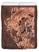 Termite Nest Reticulitermes Flavipes Duvet Cover by Ted Kinsman