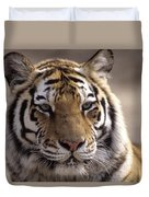 Tiger, Qinhuangdao Zoo, Hebei Province Duvet Cover