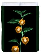 X-ray Of Chinese Lantern Plant Duvet Cover