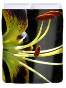 Asiatic Lily Named Black-eyed Cindy Duvet Cover