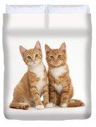 Ginger Kittens Duvet Cover