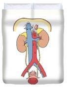 Illustration Of Female Urinary System Duvet Cover