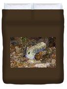 Nudibranch Feeding On Algae, Papua New Duvet Cover
