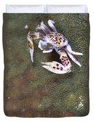 Spotted Porcelain Crab Feeding Duvet Cover by Steve Jones
