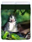 Thomas's Leaf Monkey Duvet Cover