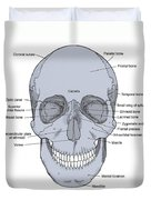 Illustration Of Anterior Skull Duvet Cover by Science Source
