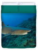 Whitetip Reef Shark, Kimbe Bay, Papua Duvet Cover