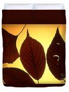 5 Autumn Leaves Duvet Cover