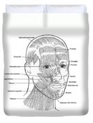 Illustration Of Facial Muscles Duvet Cover