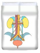 Illustration Of Urinary System Duvet Cover