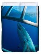 Male Great White Shark, Guadalupe Duvet Cover