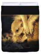 A Baby Meerkat Snuggles Duvet Cover