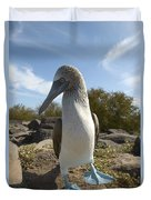 A Blue-footed Booby Of The Galapagos Duvet Cover