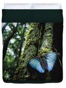 A Blue Morpho Butterfly Duvet Cover