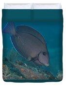 A Blue Tang Surgeonfish, Key Largo Duvet Cover