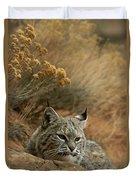 A Bobcat Duvet Cover