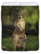 A Captive Red Kangaroo Macropus Rufus Duvet Cover