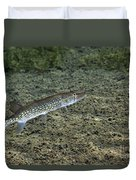 A Chain Pickerel Wimming The River Duvet Cover by Terry Moore