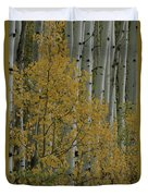 A Close View Of Quaking Aspen Trees Duvet Cover