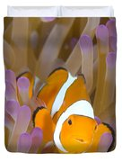 A Clown Anemonefish In A Purple Duvet Cover