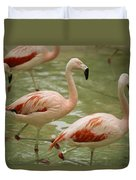 A Flock Of Chilean Flamingos Wading Duvet Cover