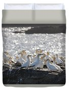 A Flock Of Gannets Standing On A Rock Duvet Cover