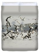 A Flock Of Laughing Gulls Larus Duvet Cover