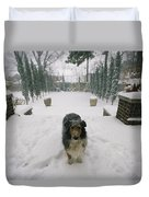 A Forlorn And Snow-dusted Sheltie Duvet Cover