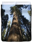 A Giant Redwood In The Mariposa Grove Duvet Cover