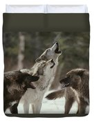 A Group Of Gray Wolves, Canis Lupus Duvet Cover