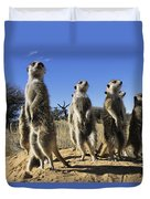 A Group Of Meerkats Standing Guard Duvet Cover