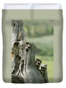 A Group Of Young Racoons Peer Duvet Cover