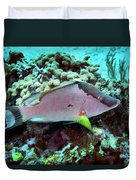A Hogfish Swimming Above A Coral Reef Duvet Cover