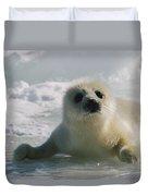 A Juvenile Harp Seal Pagophilus Duvet Cover