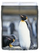 A King Penguin Stands On Pebbled Ground Duvet Cover