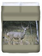 A Large Antlered White-tailed Deer Duvet Cover