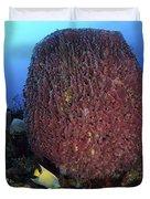 A Large Barrel Sponge With Queen Duvet Cover