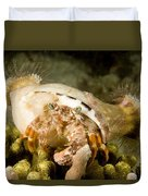 A Large Hermit Crab With Sea Anemones Duvet Cover